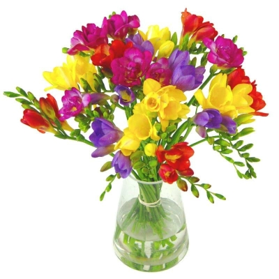 Simply Freesias