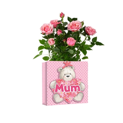 Rose Plant in a Mother's Day Gift Bag