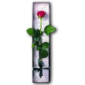 Single Rose In a Gift Box