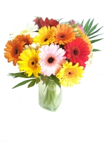 24 Mixed Gerberas