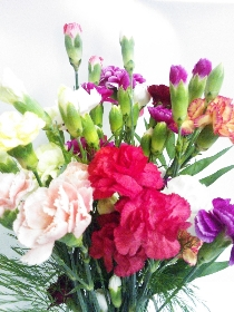 Magnificient Spray Carnations